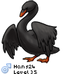 Hans24
