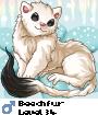 Beechfur