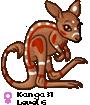 Kanga31