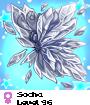 Socha
