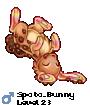 Spoto_Bunny
