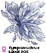 Tympanuchus