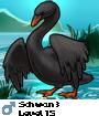 Schwan3