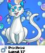 Pachae