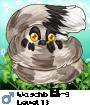 Waschbär9