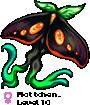 Mottchen_